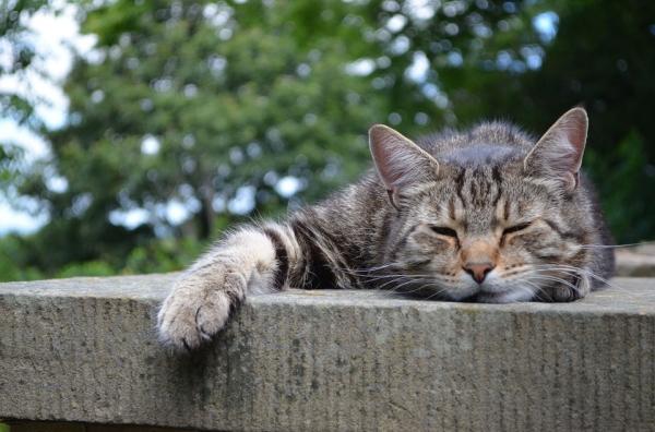 catsleep
